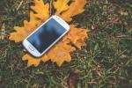 Phone on a leaf